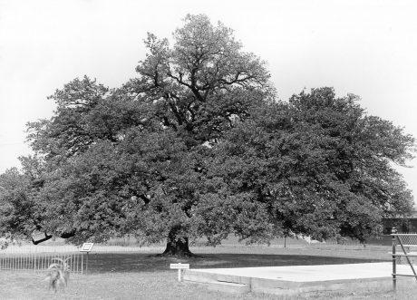 1.4.20b-Emancipation-Oak-min(1)